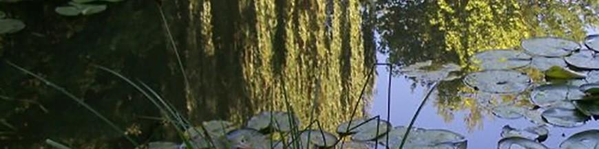 LAVARIS produits de traitement pour étang